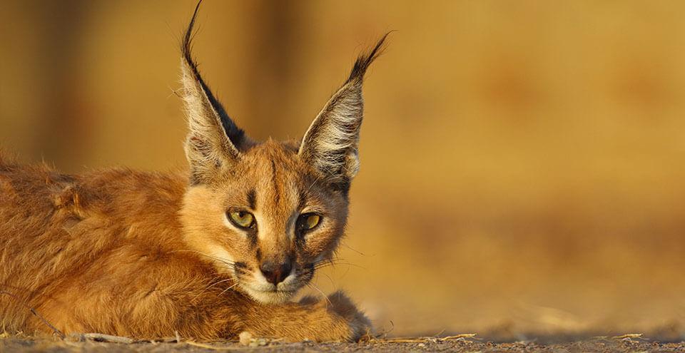 National Parks and Wildlife Sanctuaries in Rajasthan | Bird