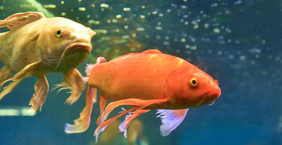 Udaipur Fish Aquarium